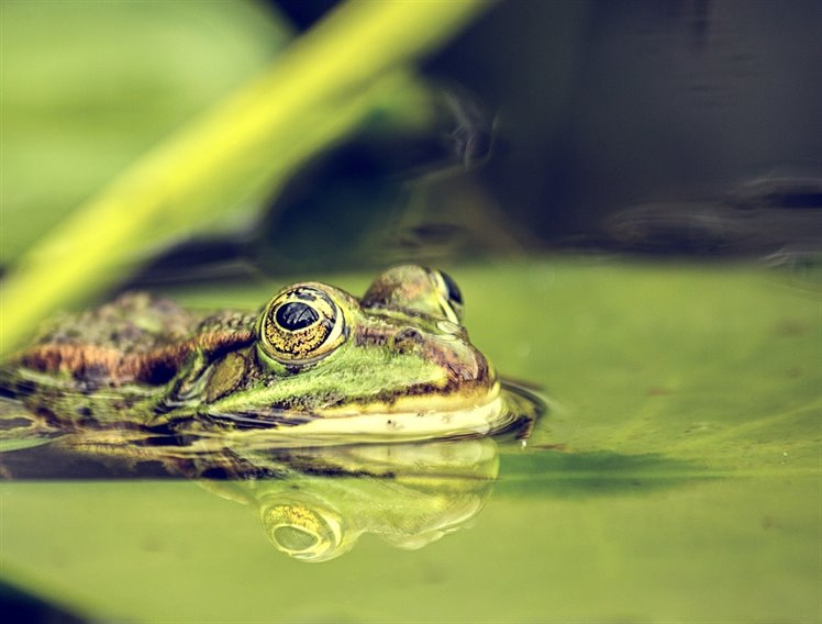 frog-1807664_1920
